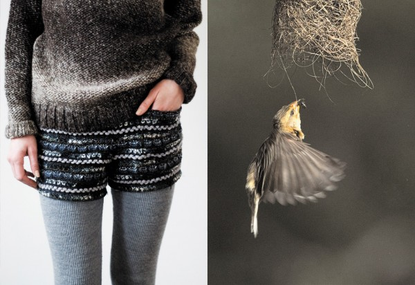 bird fashion, design squish blog