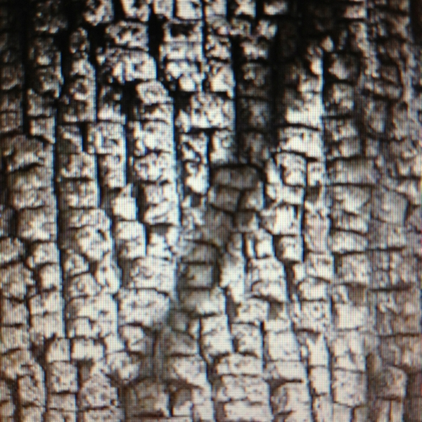 tree bark, nature photography, design squish blog