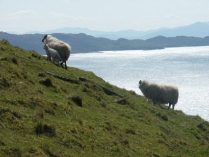 Isle of Skye sheep, design squish blog