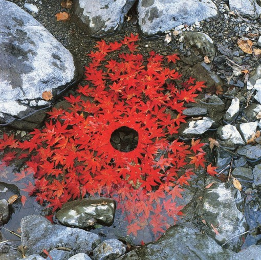 fall leaves, andy goldsworthy, design squish blog