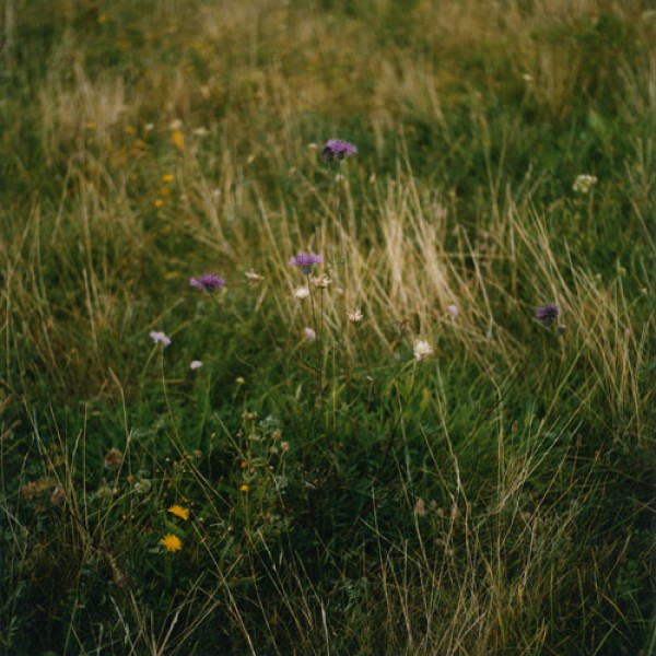 contemporary photography, anne schwalbe, wiese, grass, field, design squish blog