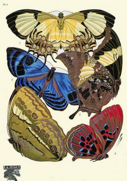 botanic illustration, moth, butterflies, eugene seguy, design squish blog