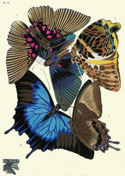 botanic illustration, moth, butterflies, eugene seguy, vdesign squish blog