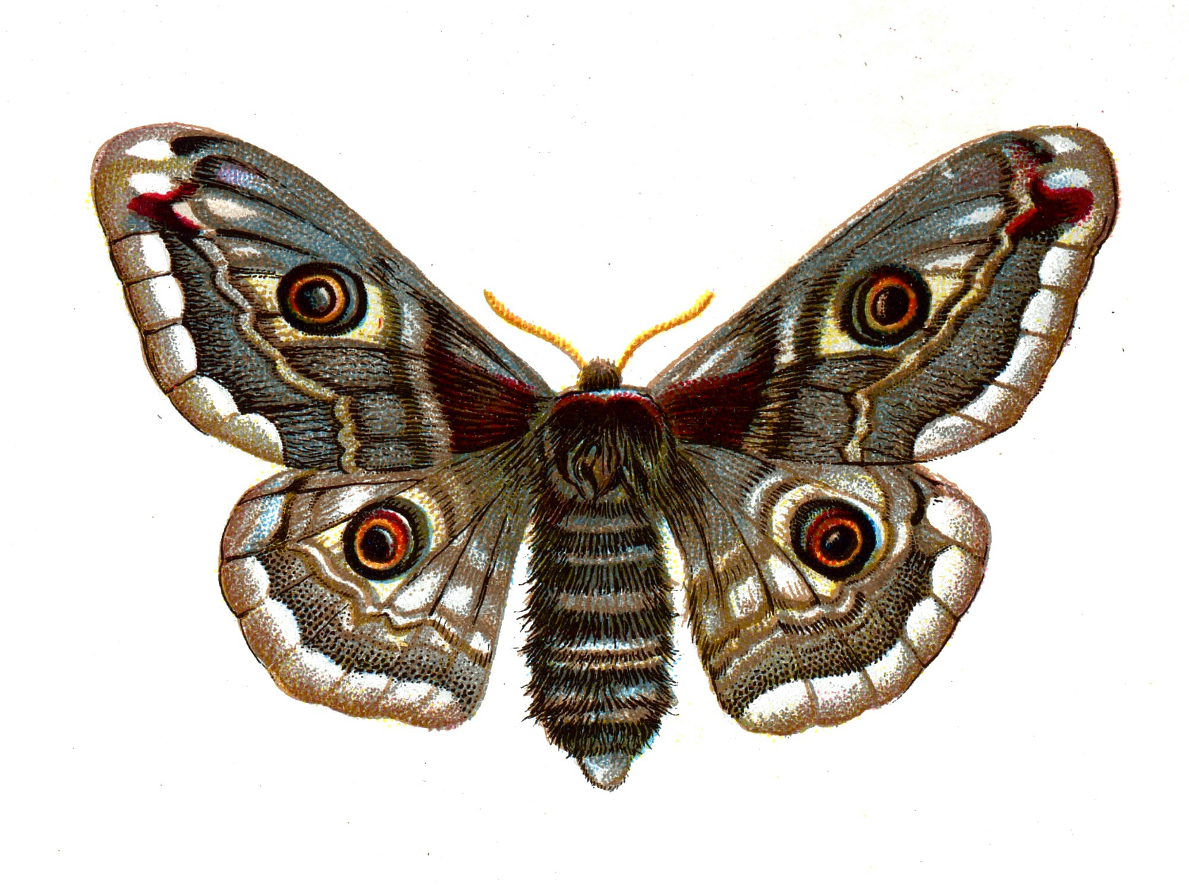 Design squish blog google old book and you will findbutterflies google old book and you will findbutterflies solutioingenieria Choice Image