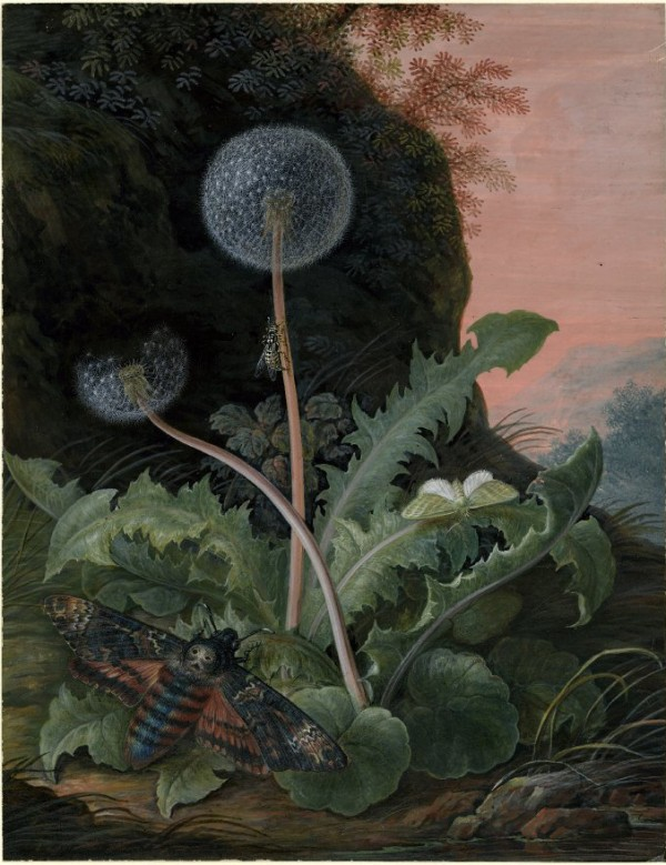 Dandelion with a moth and a smaller green moth or butterfly, in a landscape with a bank and pink sky, design squish blog