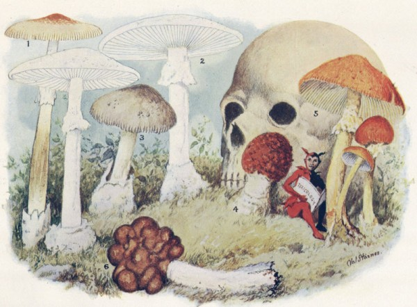 poisonous mushrooms illustration, design squish blog