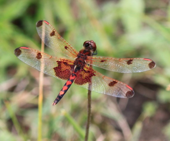 dragonfly, microcosmos, macrophotography, harriman state park,design squish blog