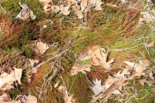moss after snow early spring