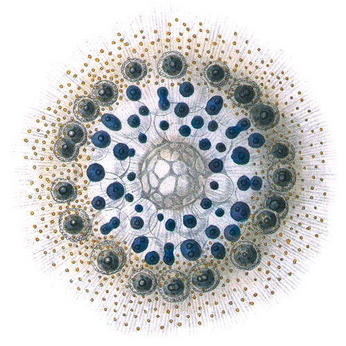 ernst haeckel illustrations, microcosm and macrocosm, design squish blog