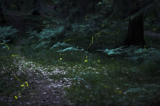 capturing fireflies on photo, nature, summer, fireflies glow, design squish blog