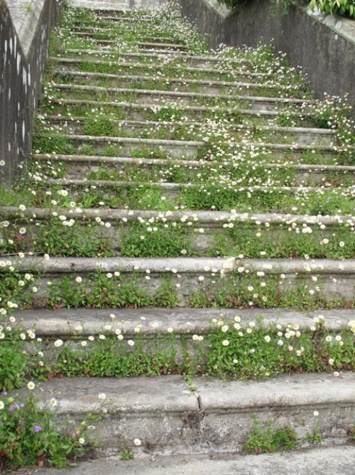 flowers on steps, design squish blog