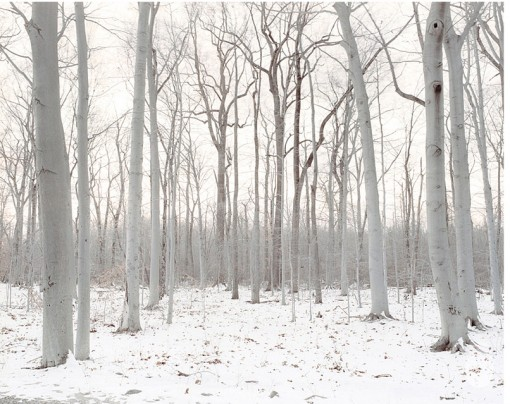 white forest, still, photograph, lane coder
