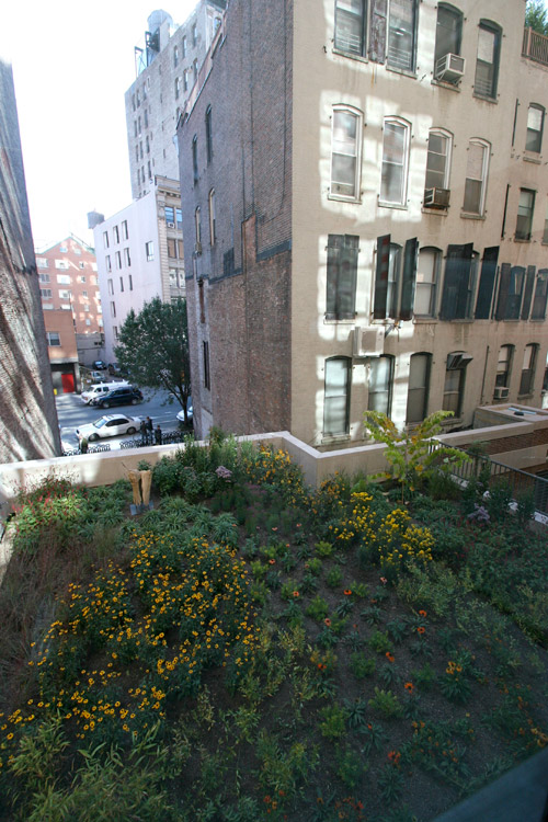 green roof, design squish blog