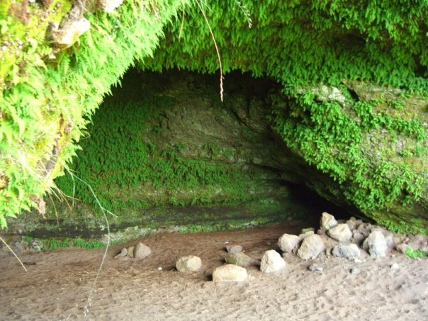 iceland green fern cave