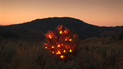 burning bush, installation
