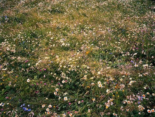 alpine wildflowers, contemporary photography, controlled nature vs unbound nature, design squish blog