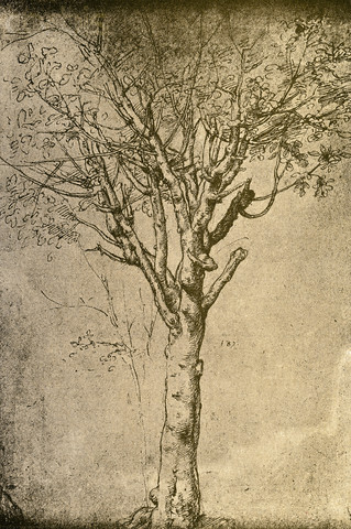 tree sketch leonardo da vinci