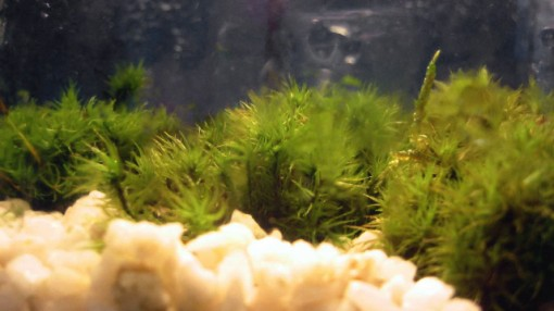 moss-garden, terrarium, close up, design squish blog