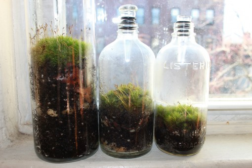moss terrariums, vintage bottles, moss garden, design squish blog