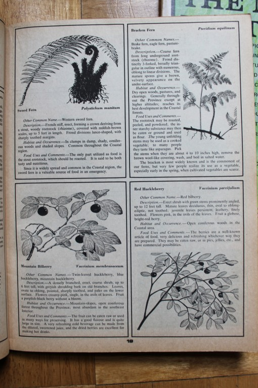 vintage mother earth news magazine, berries and roots of british columbia, design squish blog