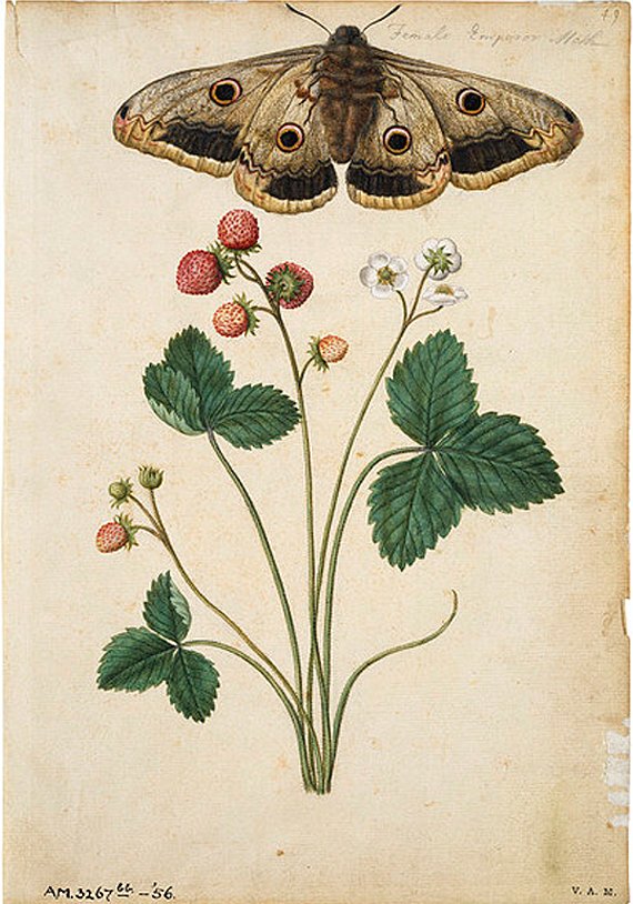 moths and flowers, JACQUES LE MOYNE, design squish blog