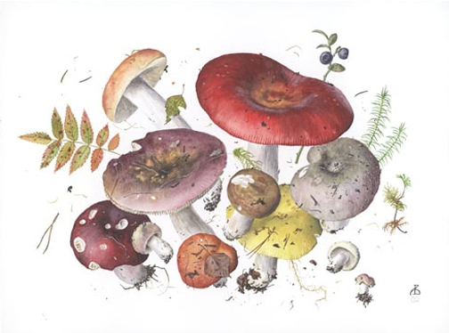 mushroom illustration