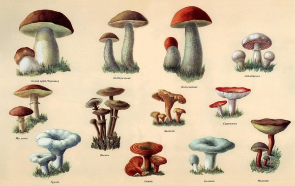 russian dacha nostalgia, childhood, mushrooms chart, russian, design squish blog