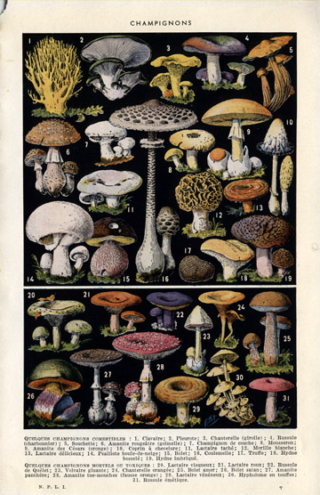 mushroom illustrations poster