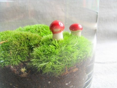moss as home plant