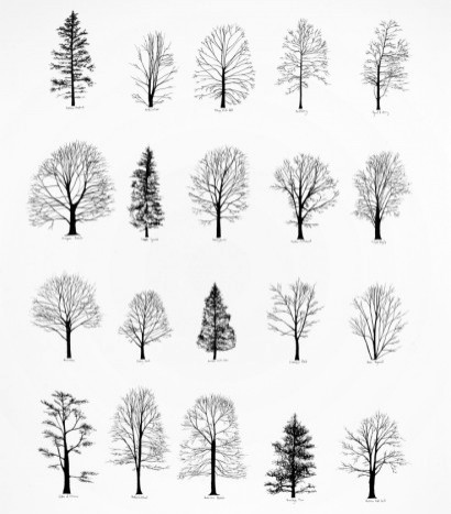 how to draw trees architecture