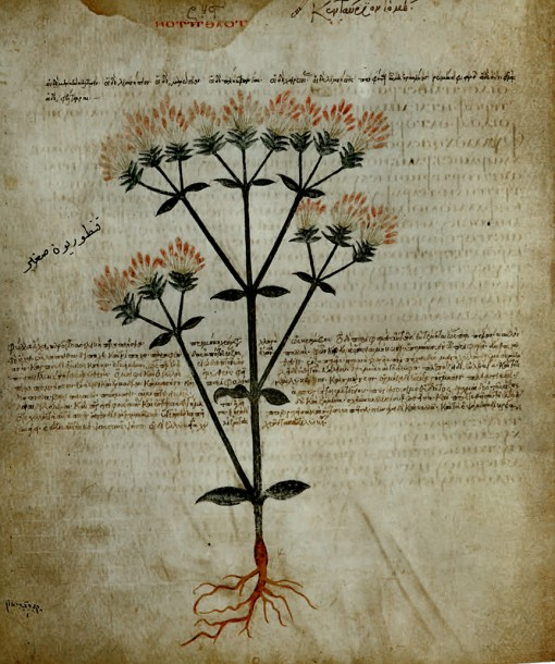 old botanical illustration