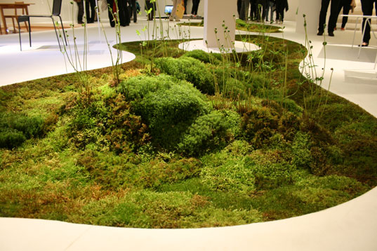 Biodegradable moss planter, organic carpet consisting of assortment of mosses