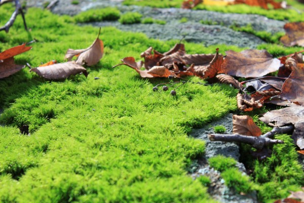 moss hiking in  upstate new york, pine meadow lake - october, autumn, design squish blog