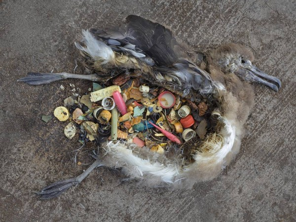 Midway, photography project by Chris Jordan, plastics do not disintegrate, design squish blog