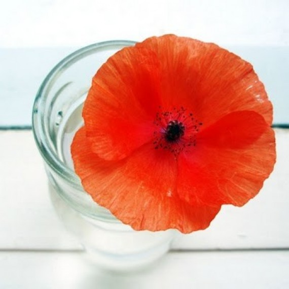 poppy flower, design squish blog