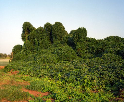 kudzu, photography, art, rob hann, design squish blog