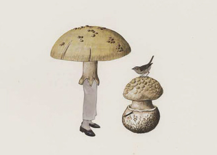 amy ross scientific illustration: Mushroom with Mird