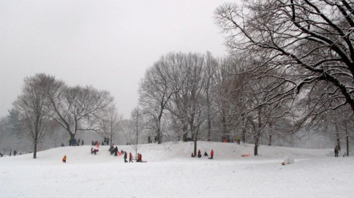 sledding in prospect park