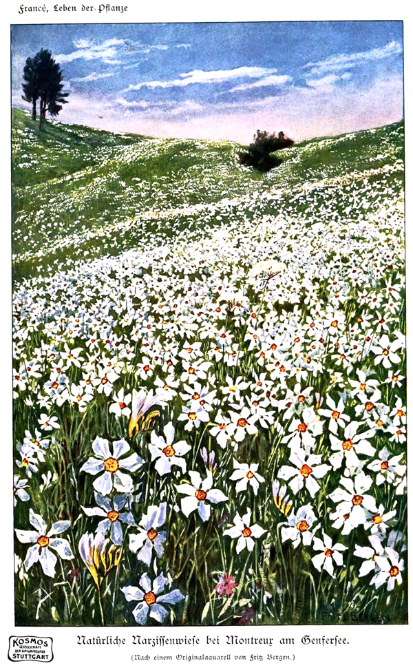 spring flowers, field, design squish blog