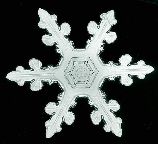 snow crystals, snowflakes under microscope, snowflakes, design squish blog