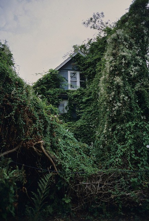 green houses overgrown with vines, design squish blog