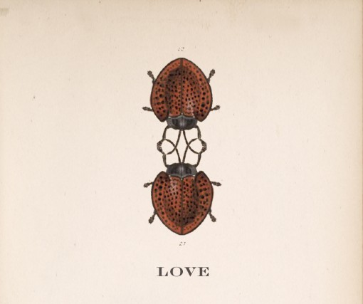 beetle love, valentines day card
