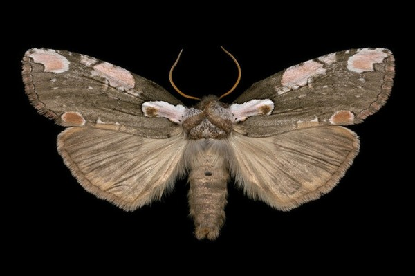 moths, winged tapestries, design squish blog